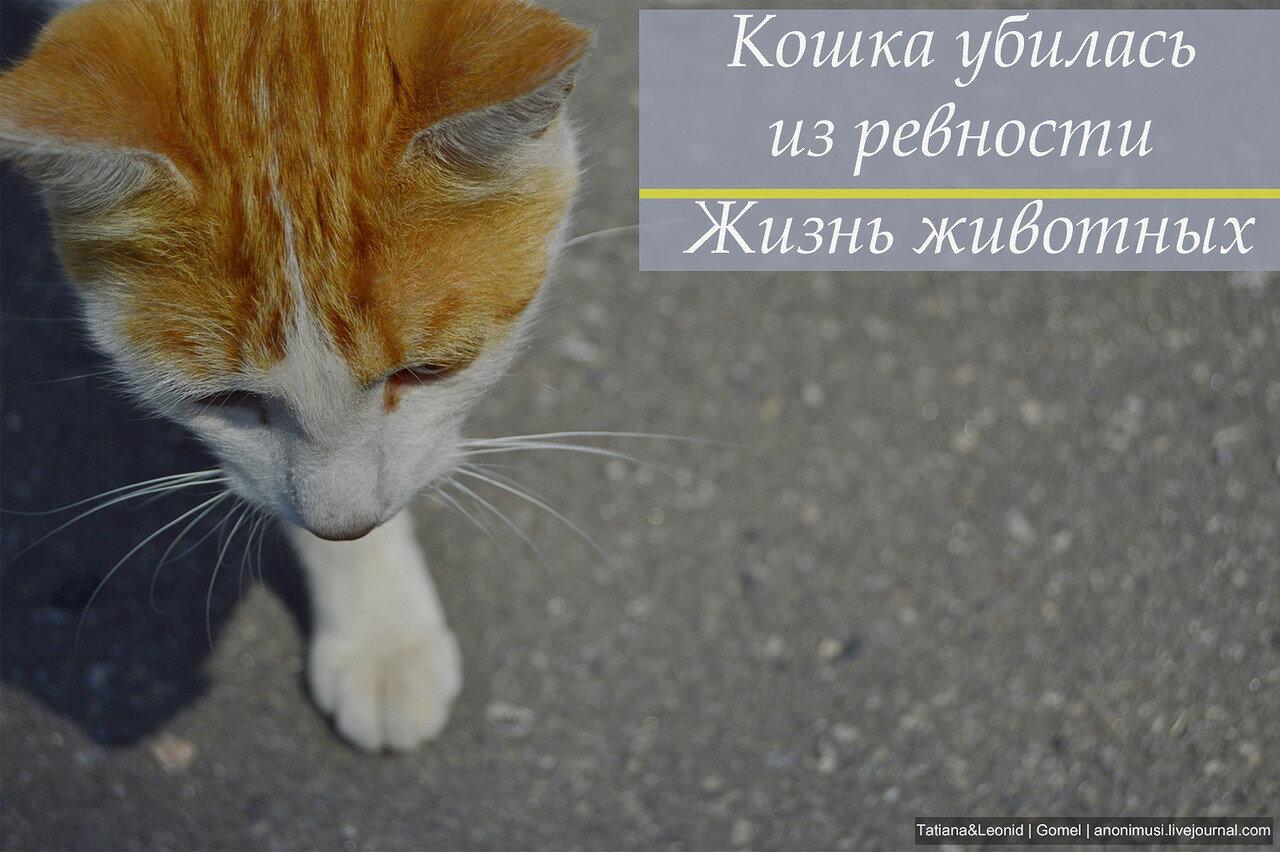 Кошка и ревность