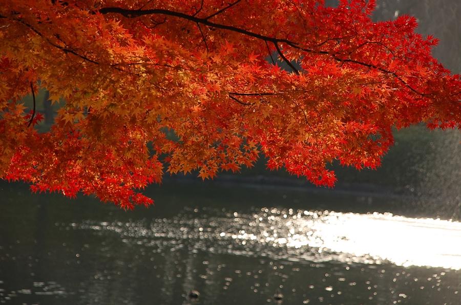 фотограф  suika2006