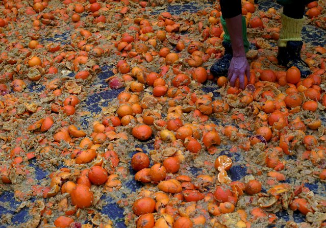 A member of a rival team collects a orange from the ground during an annual carnival battle in the n