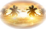 Caribbean-coast-beautiful-scenery-sunrise-palm-trees-sea-clouds-sky.png