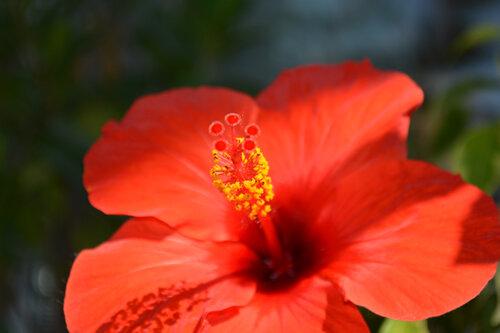 цветёт всё лето