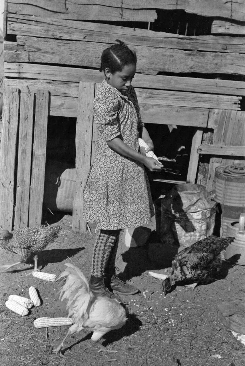 Дочь Помп Холла, негритянского арендатора, кормящая кукурузой трех цыплят, округ Крик, Оклахома, 1940