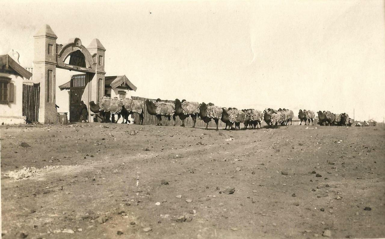 Караван верблюдов у таможни