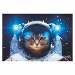 Cat-the-astronaut.jpg
