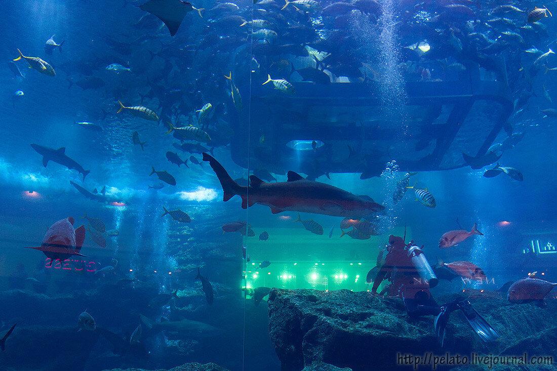 аквариум aquarium Dubai Mall молл Dubai Дубаи ОАЭ UAE