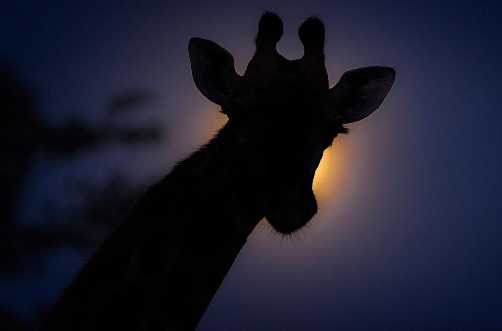 Ночная Африка