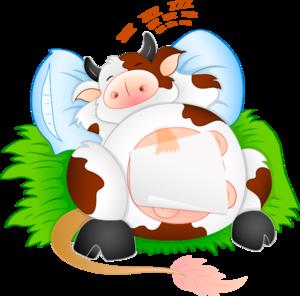 корова спит