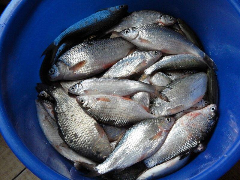 рыбалка город таганрог