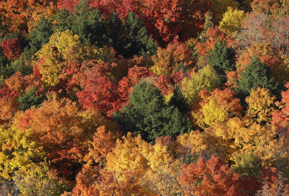 16. Осенние листы на западе Франции, 18 октября 2016. (Фото Stephane Mahe   Reuters):