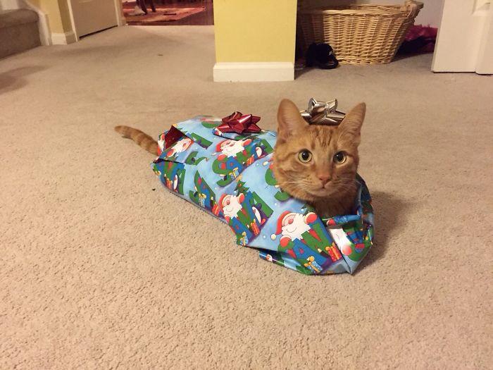 Хозяйка, лучший твой подарочек — это я!