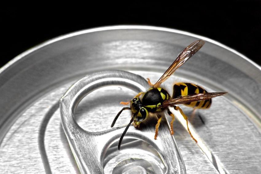 10. Удерживает ос и других мелких насекомых на расстоянии. Кола способна удерживать насекомых на нек