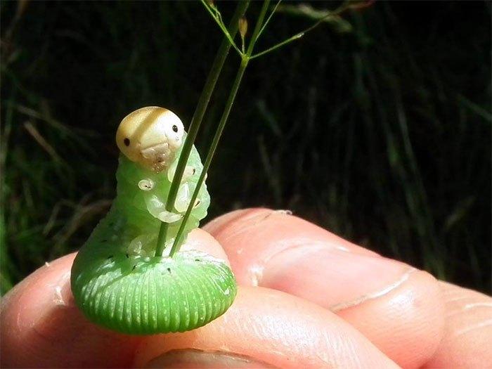 Очаровательная гусеница с травинкой неожиданно стала звездой фотошопа (21 фото)