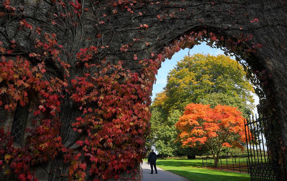 28. Золотая осень в Шотландии, 25 октября 2016. (Фото Jeff J Mitchell):