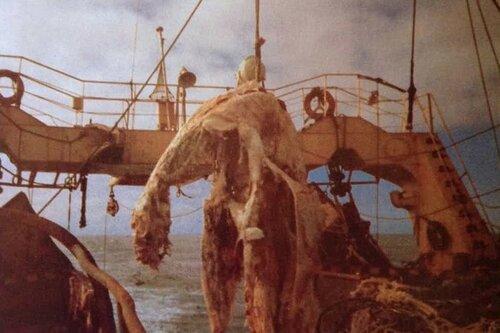 Тайны океана. Таких морских монстров вы ещё не видели!