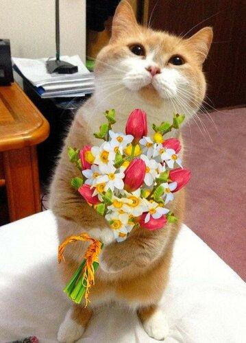 Фото с цветами и кошками