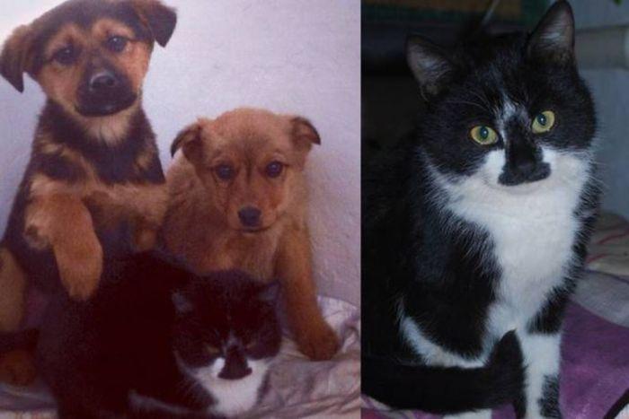 Кошка спасла щенков от голодной смерти
