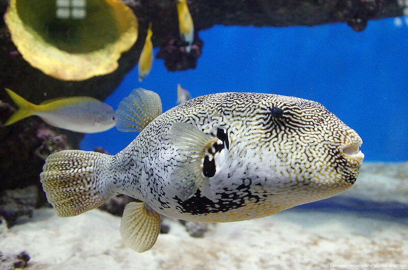 Зима. Москвариум. аквариум. 09.12.16.09..jpg