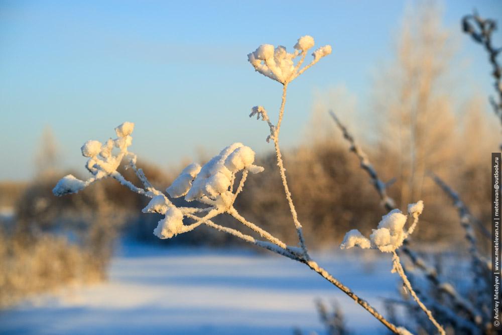 фотография замерзшего куста