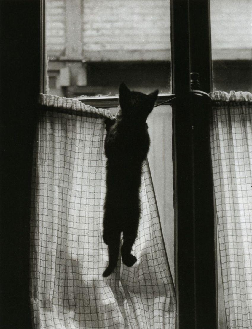 1954. Окно, Париж