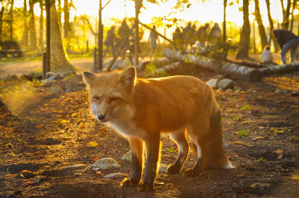 Tierpark-(8).jpg