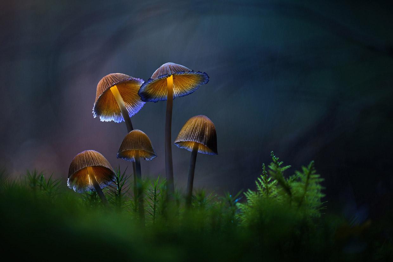 Сказочные снимки грибов