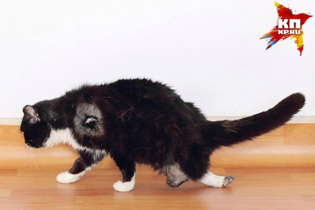 кот выжил после удара током