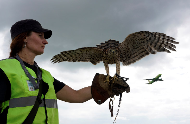 Орнитологическая служба аэропорта (10 фото)
