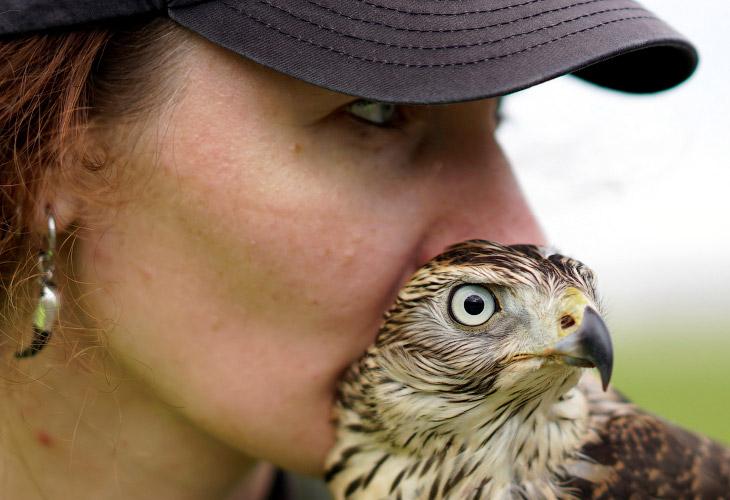 Всех птиц, представляющих опасность для самолетов, разделяют на категории по весу и размеру. Максима