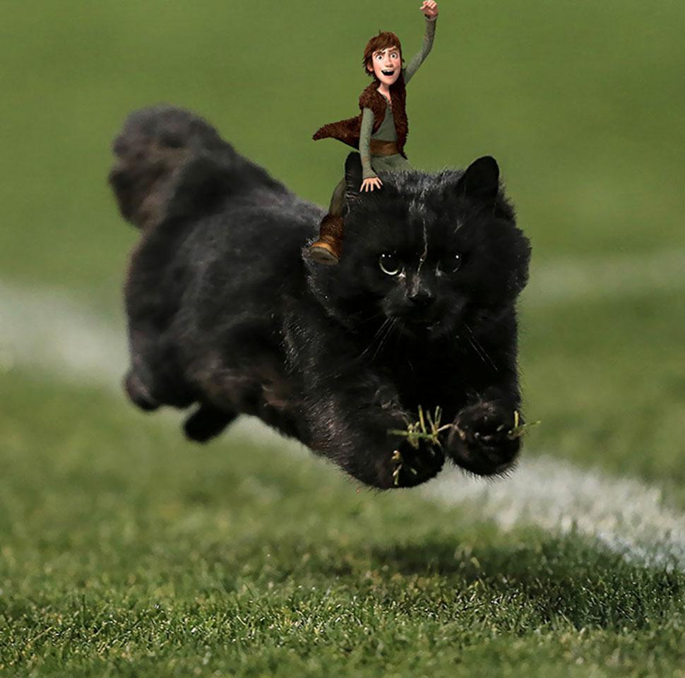 Как приручить кота.