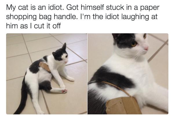 «Мой кот — идиот. Он застрял в ручке от бумажного пакета. Я — идиот, который смеется над ним, пока с