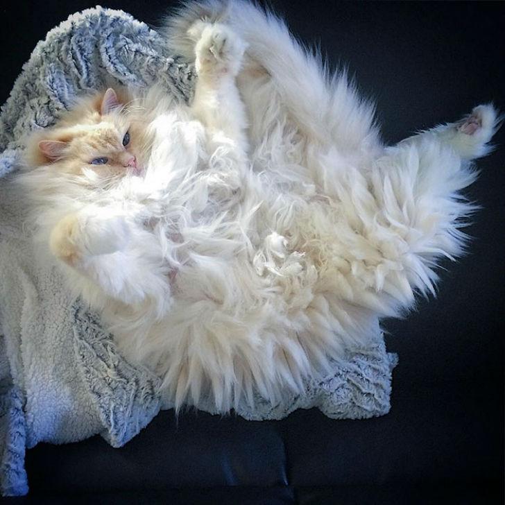 Я пушистое облачко, я вовсе не кот
