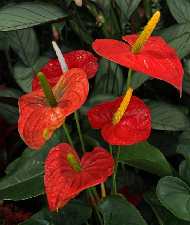 Топ-15 растений для очистки воздуха помнению NASA (15 фото)