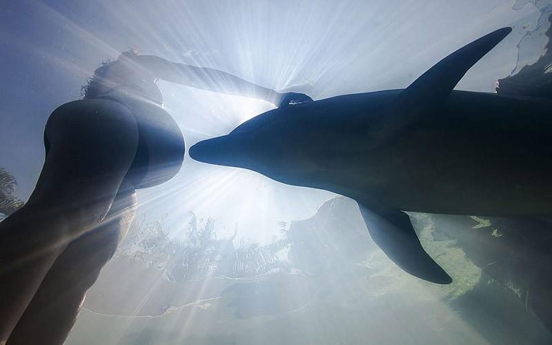 Дельфин и беременная женщина у берега Икстапы, Мексика. Ixtapa, MexicoPicture: CATERS Абсолютно уник