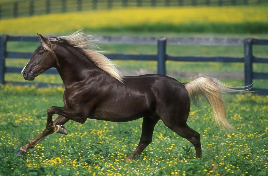 Великолепные лошади