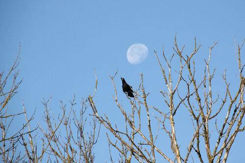 Птица и осень