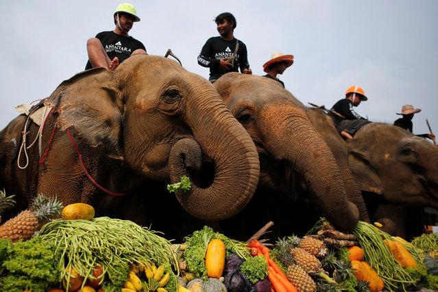 King's Cup Elephant Polo Tournament (17 pics)