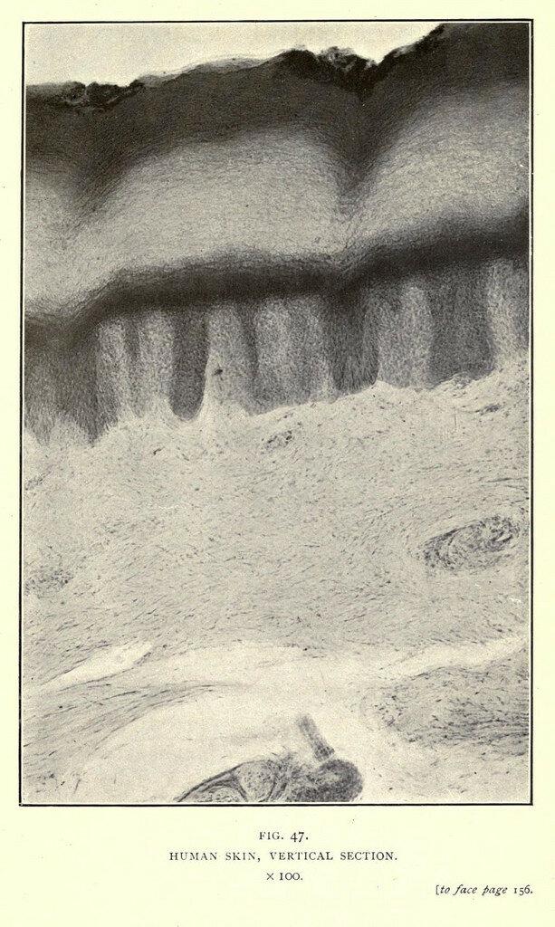 camera-1909-20.jpg