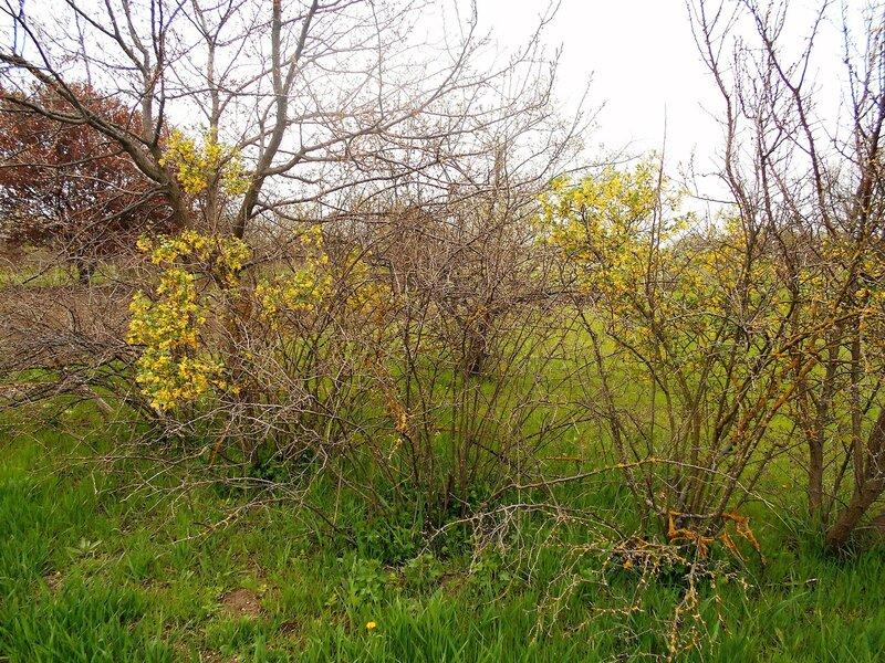 Пора цветения и зеленения ... DSCN5113.JPG