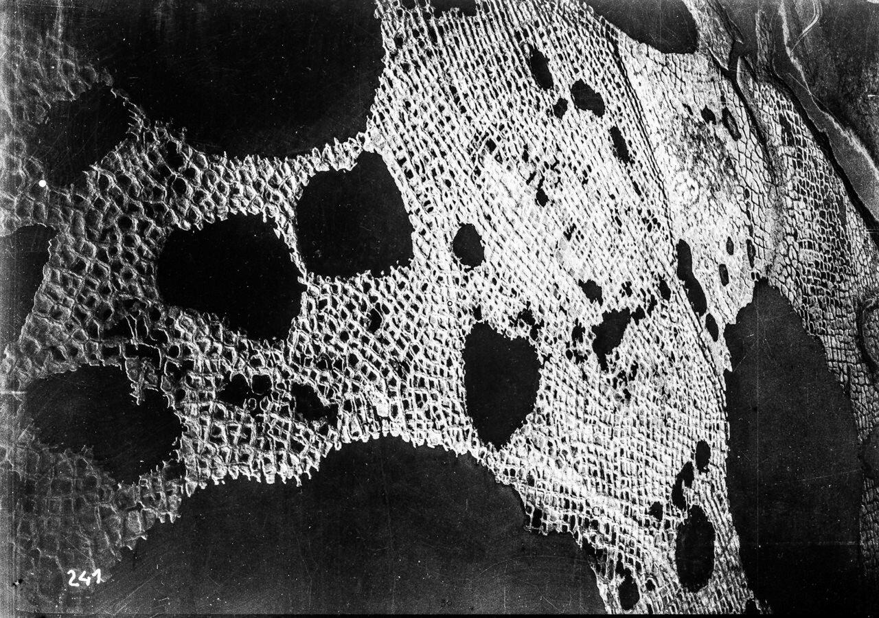 1931. Таймыр. Вид с воздуха на район озера Таймыр