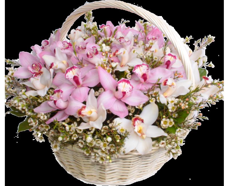 онлайн поздравление юбилей орхидея нее нет недостатка