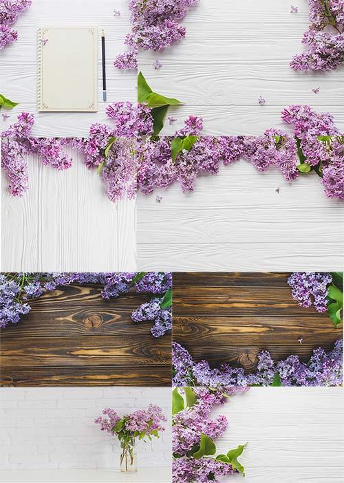 Сирень - Клипарт / Lilac - Clipart