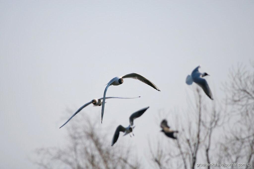 Чайки нашего городка