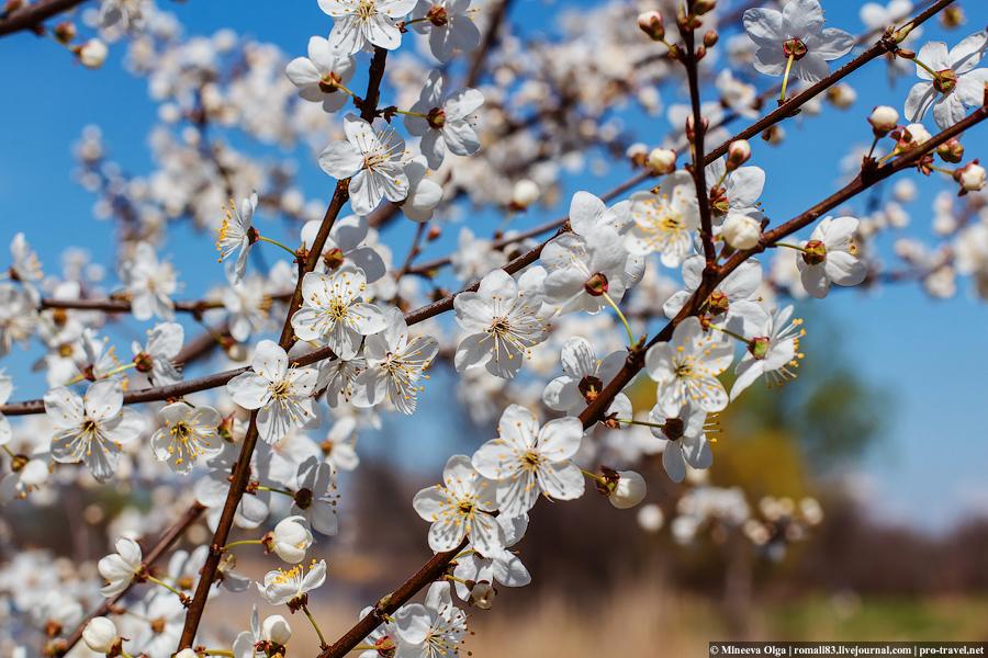 Весну в ленту
