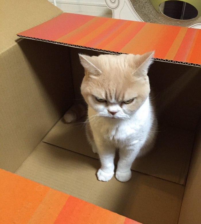 Коюки — самый сердитый кот Японии (10 фото)