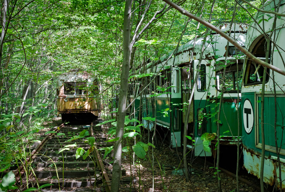HD лес призраки