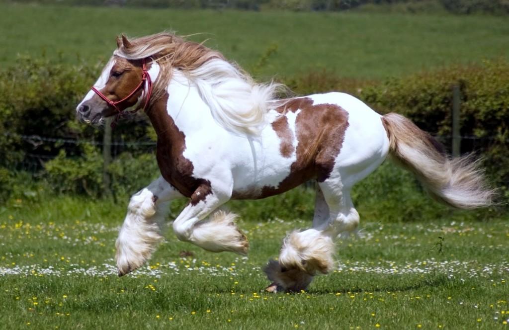 25 чудесных лошадей, от красоты которых перехватывает дыхание