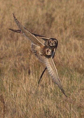 owls14.jpg