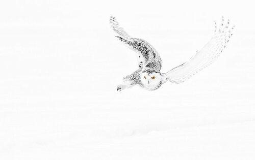 owls18.jpg