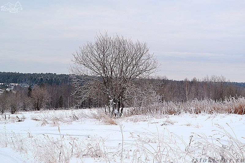 дерево_в_инее_derevo_v_inee