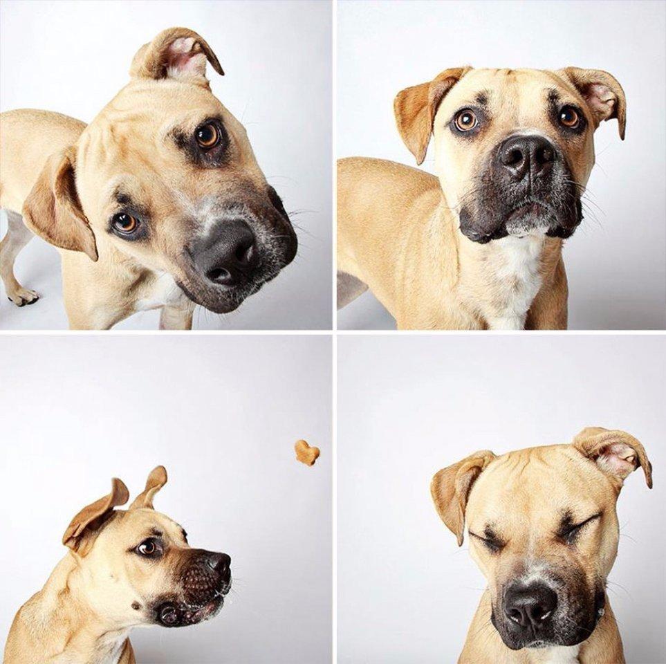 Xочу два! Фотографии - помощь бездомным животным штата Юта